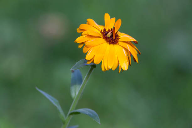 Yellow flower in a green field with an out of focus background stock photo