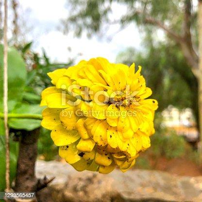 A yellow flower in the Flower Garden