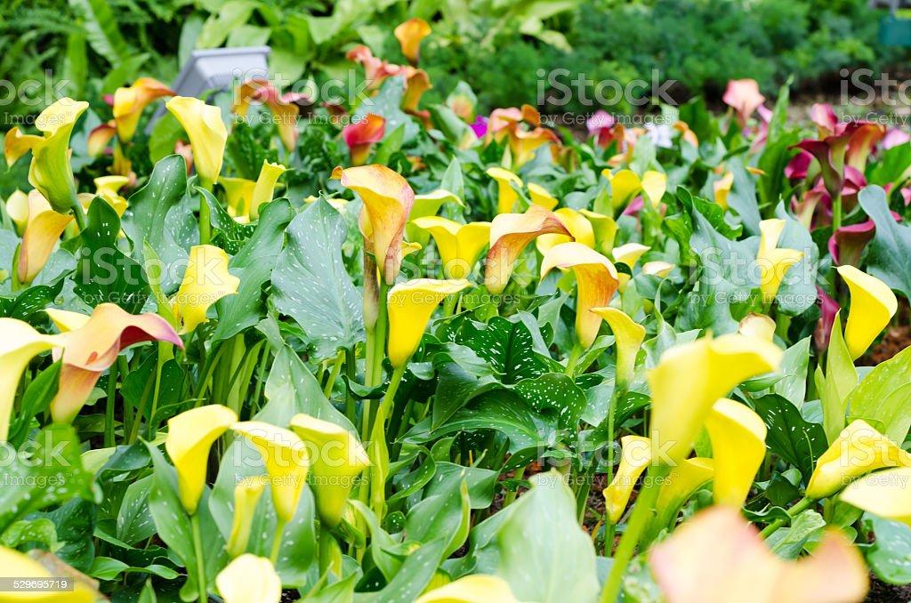 Photo libre de droit de Jaune Fleurs Dans Le Jardin Dhiver ...
