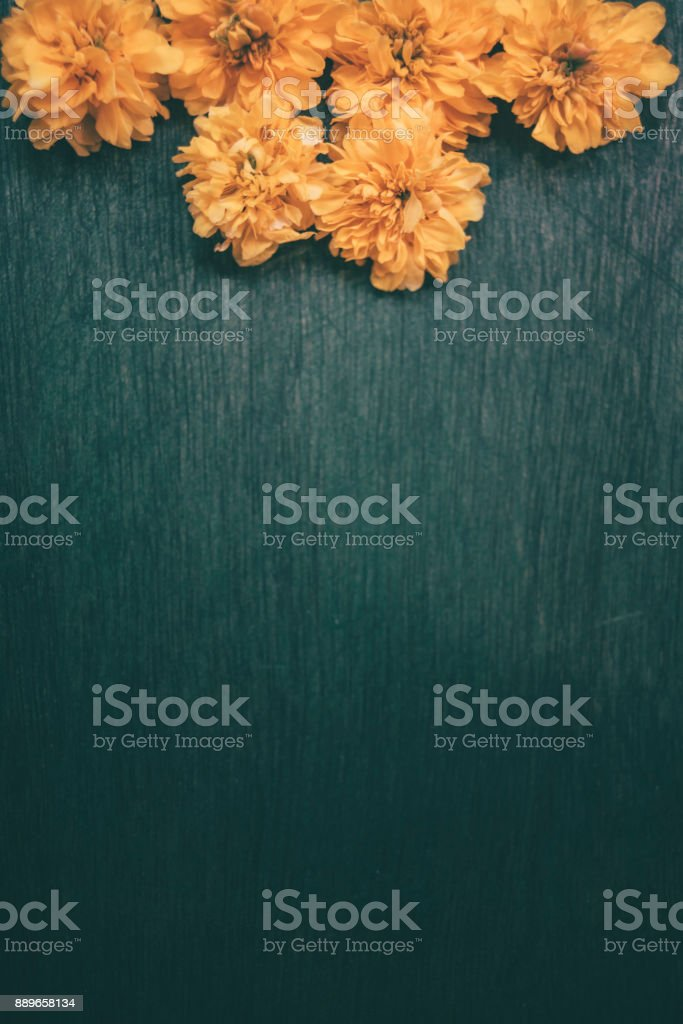 Yellow flower Kerria japonica stock photo