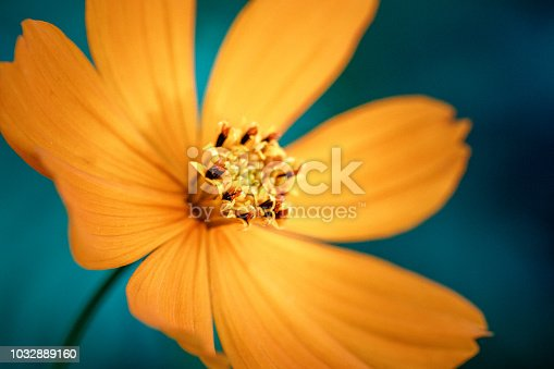 istock Yellow flower macro close up 1032889160