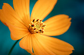 Yellow flower macro close up