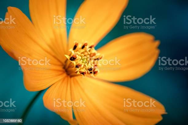 Yellow flower macro close up picture id1032889160?b=1&k=6&m=1032889160&s=612x612&h=7jf4ojdd0wgj9rwz1i qazaukcrifirldw4txm02fps=