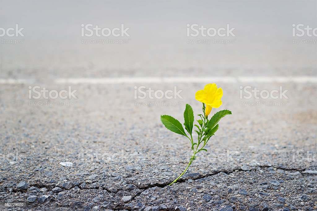 yellow flower on crack street, soft focus – Foto