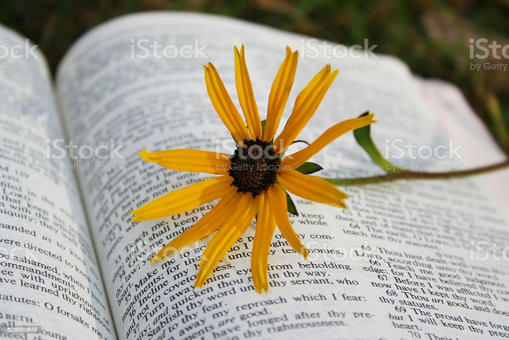 Yellow Flower on Page of Holy Bible stock photo