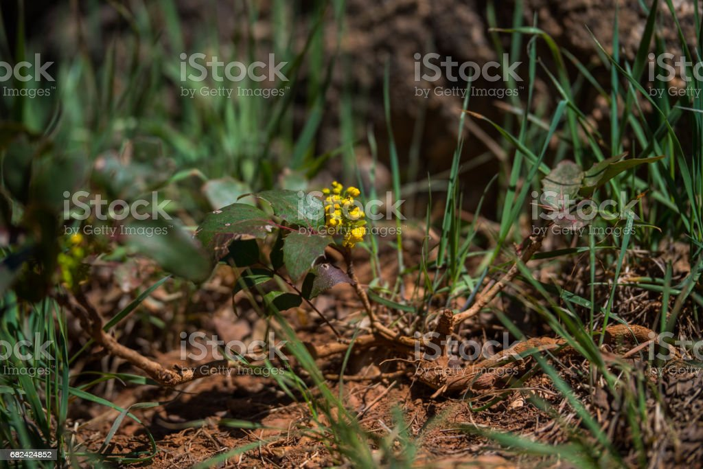Yellow Flower One royalty-free stock photo