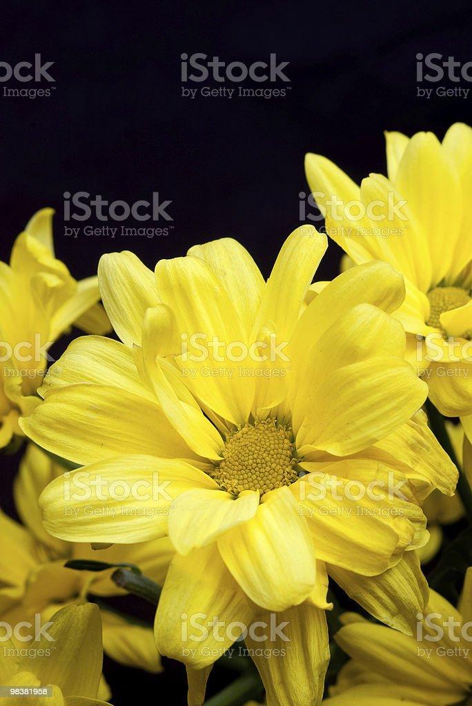 yellow flower petals on black royalty-free stock photo