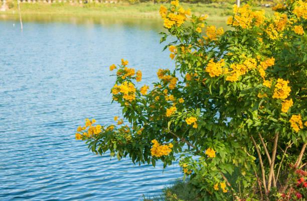 gelbe Blume. – Foto