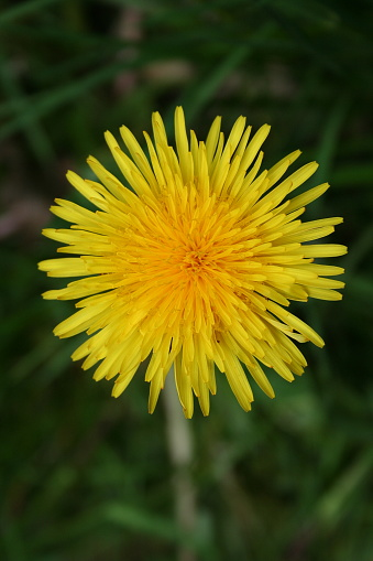 Yellow flower blooming in springtime