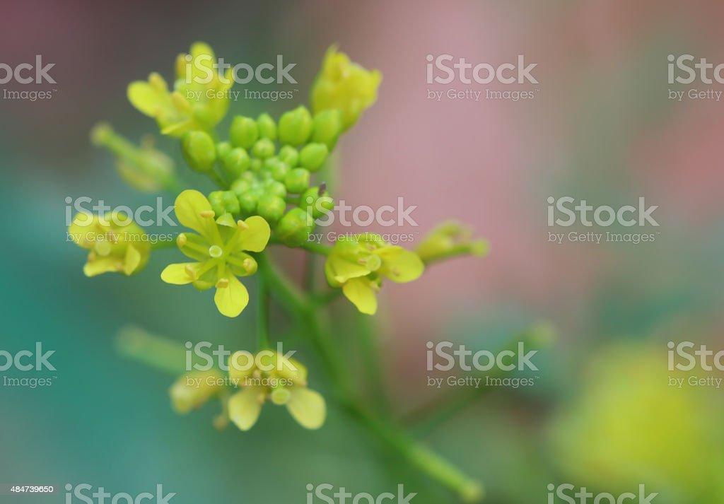 Gelbe flower – Foto