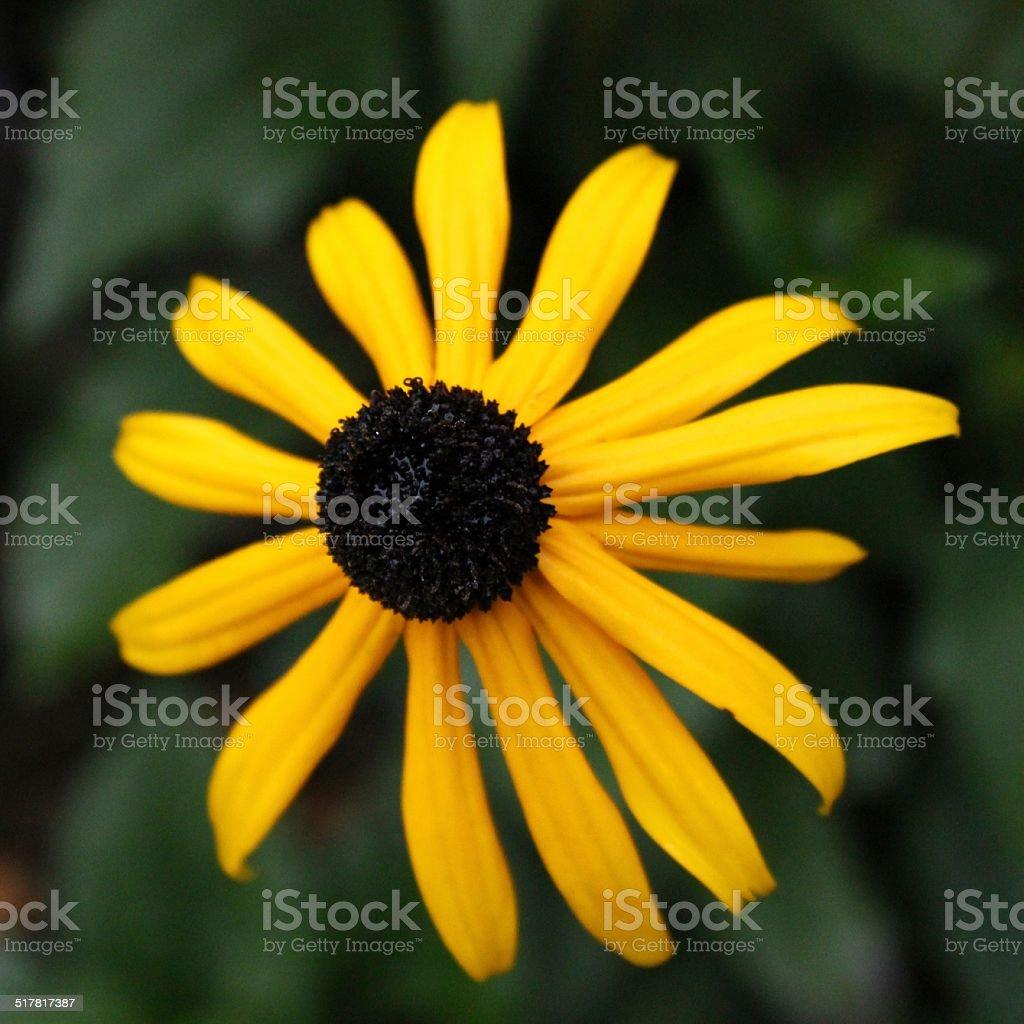 Gelbe Flower - Lizenzfrei Baumblüte Stock-Foto