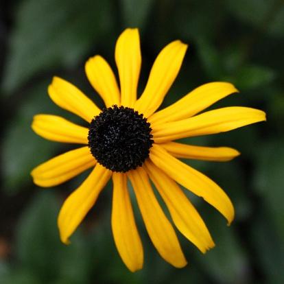 Gelbe Flower Stockfoto und mehr Bilder von Baumblüte