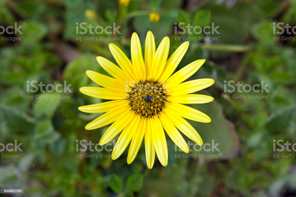 yellow flower stock photo