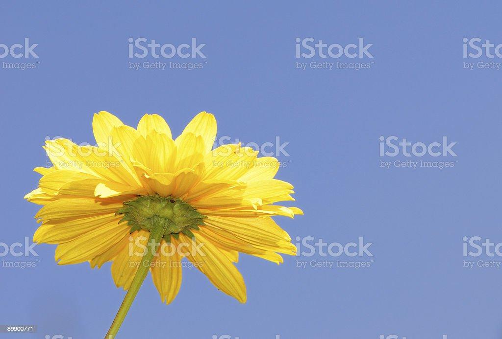 Gelbe flower Lizenzfreies stock-foto