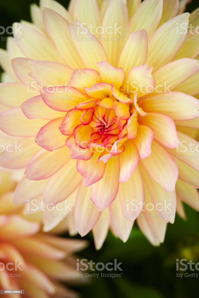 Yellow flower - Стоковые фото Без людей роялти-фри