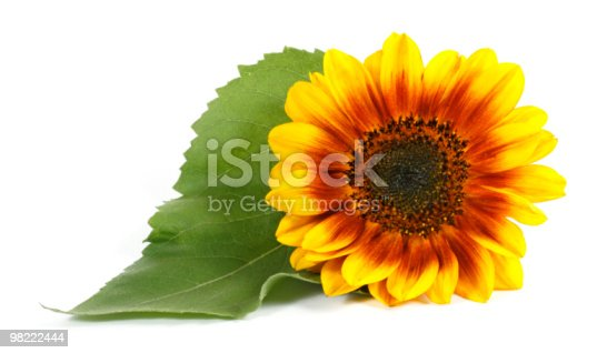 Yellow Flower Stock Photo & More Pictures of Backgrounds