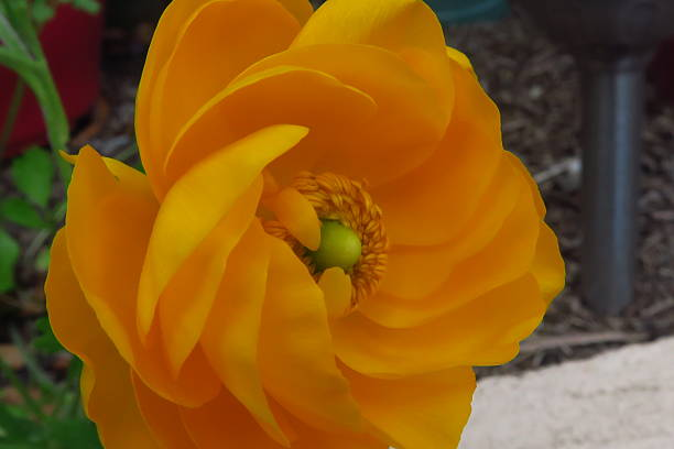 Yellow flower side on stock photo