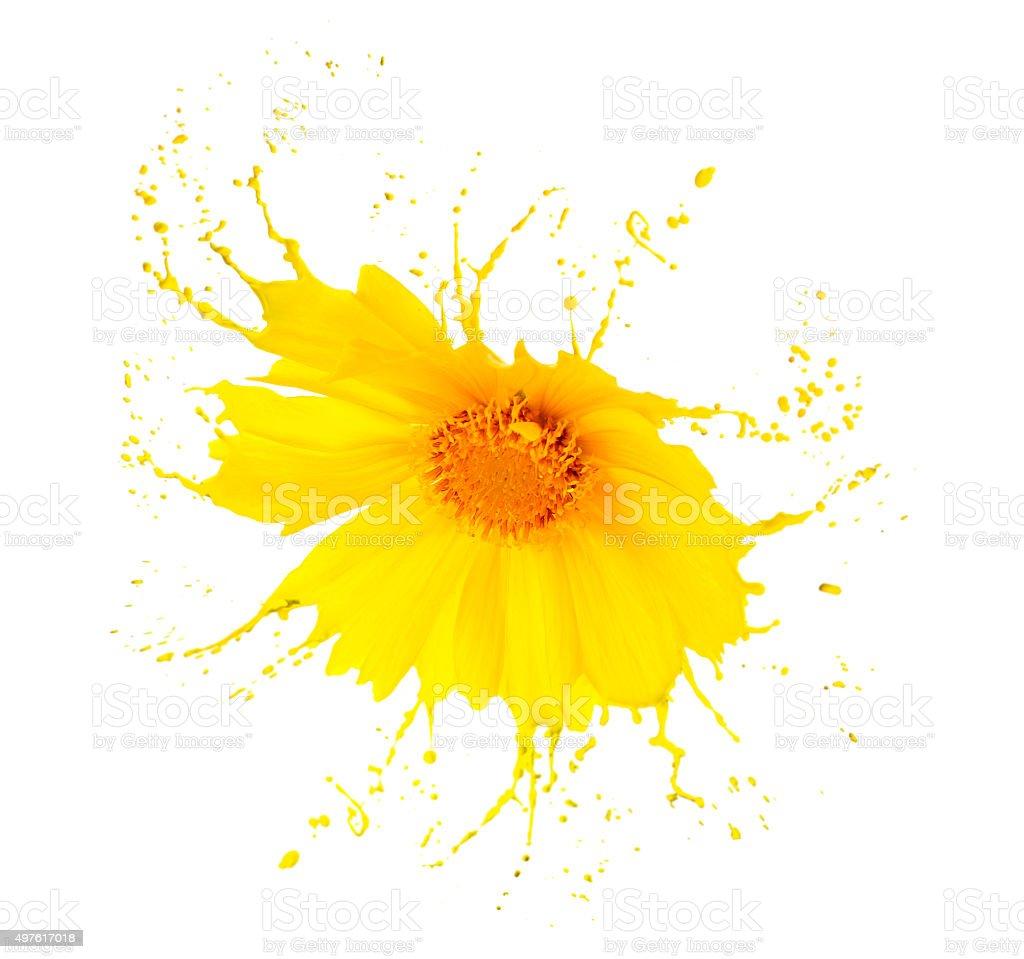 yellow flower splashes stock photo