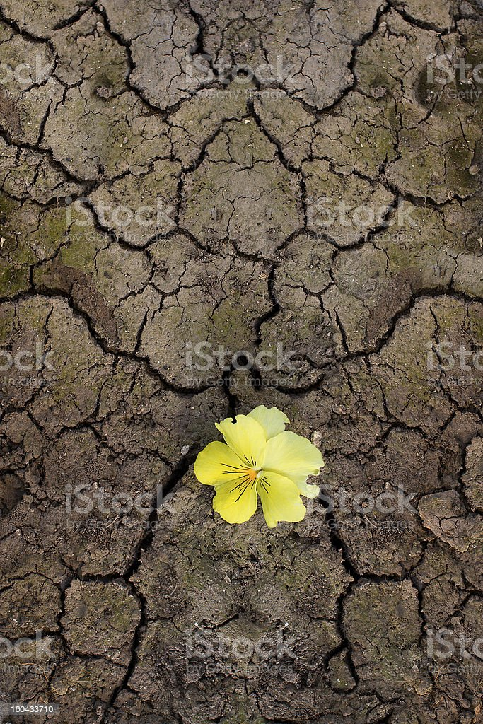 Yellow Flower Sprouting Through The Cracks stock photo
