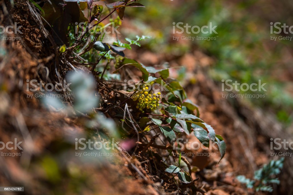 Yellow Flower Two royalty-free stock photo