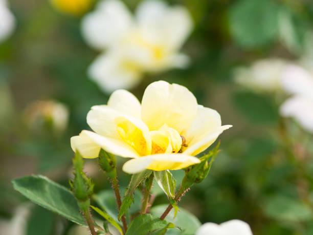 Yellow Flower Up Close stock photo
