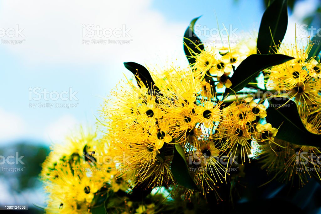 Yellow flower with blue sky backgrounds stock photo