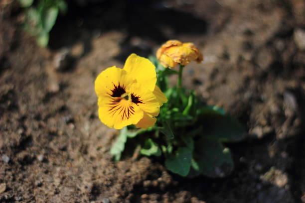 Gelbe Blume mit Boden-Hintergrund – Foto