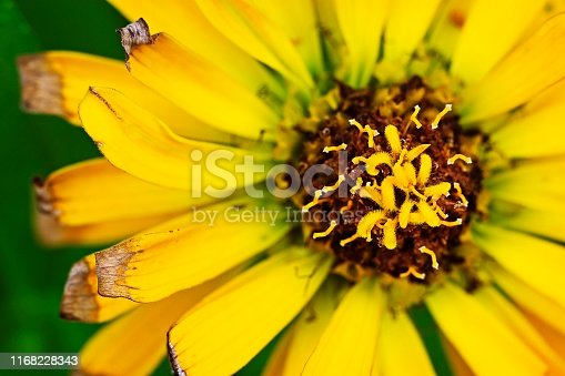 Yellow flower with pollen.