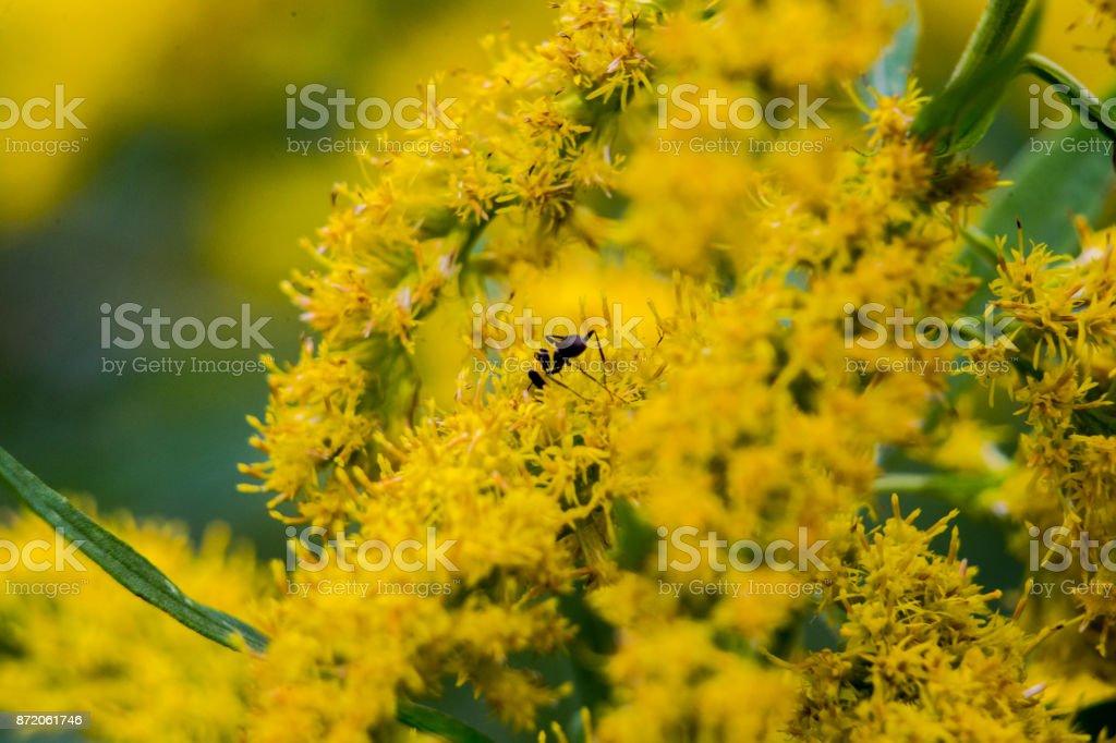 Yellow flowering weeds 2 stock photo more pictures of blossom istock yellow flowering weeds 2 royalty free stock photo mightylinksfo