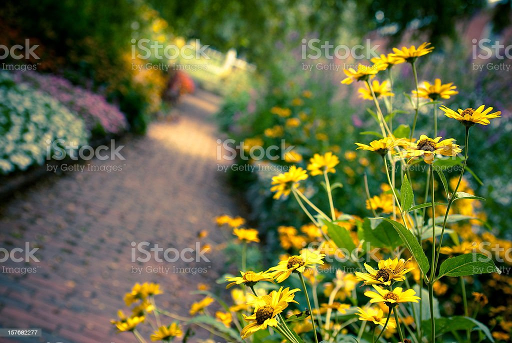 Yellow flowers along brick path in a garden stock photo
