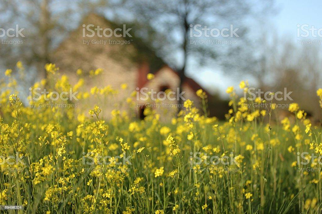 Yellow Flowers and Farmhouse royalty free stockfoto