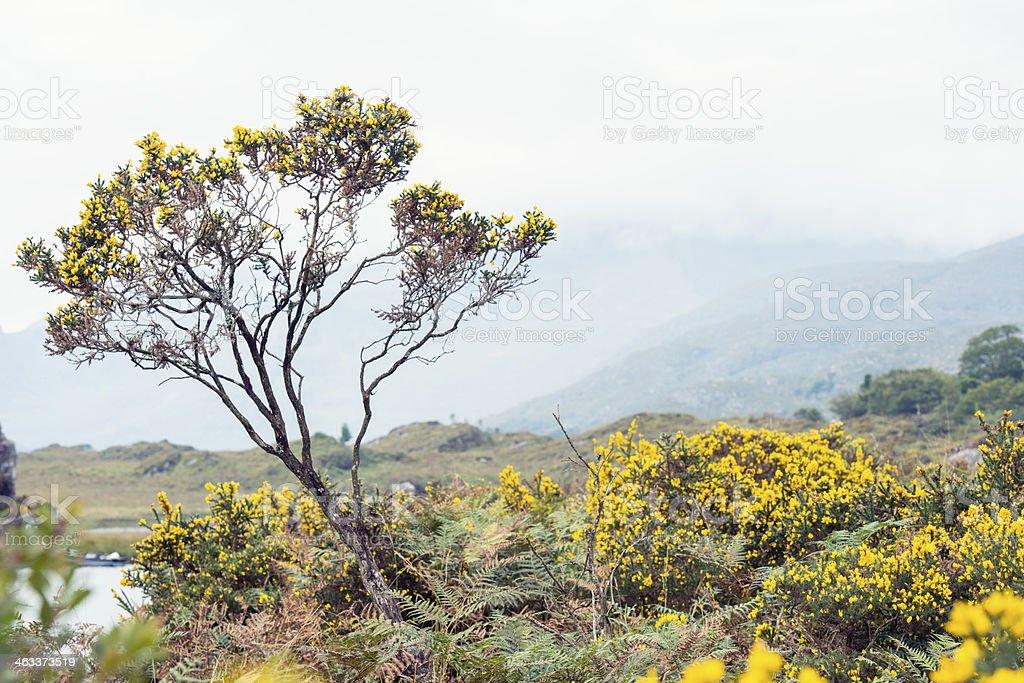 Fiori Gialli Irlanda.Fiori Gialli E Albero Nel Parco Nazionale Kilarney Irlanda