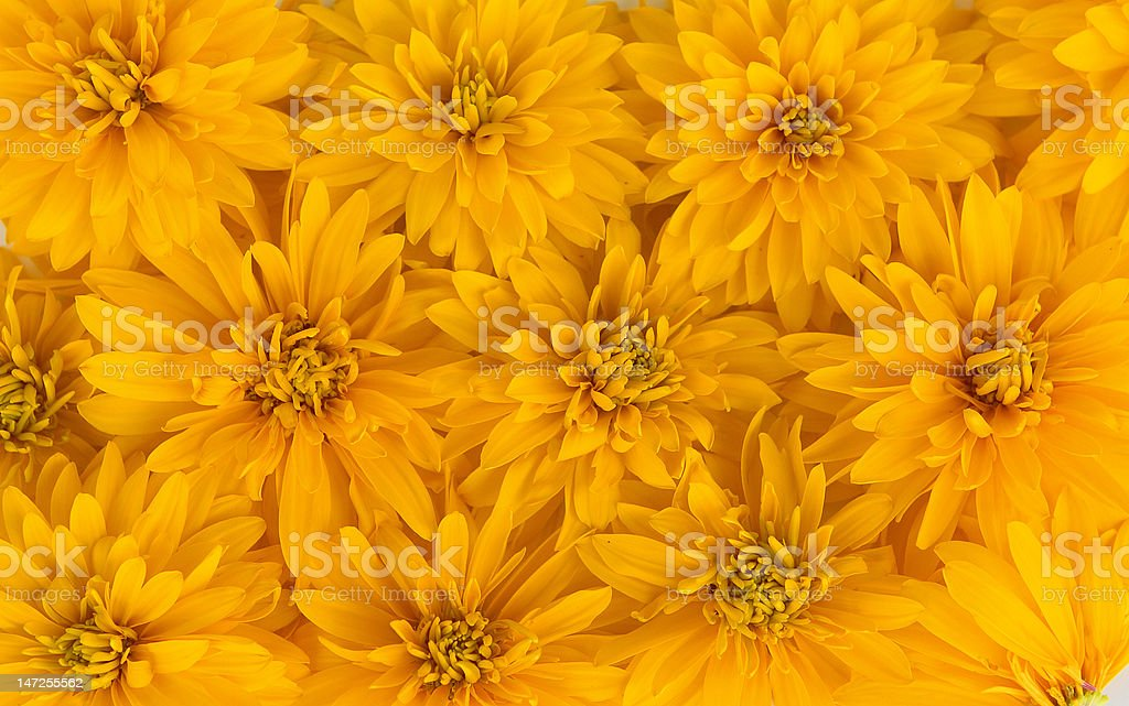 Yellow flowers background royalty-free stock photo
