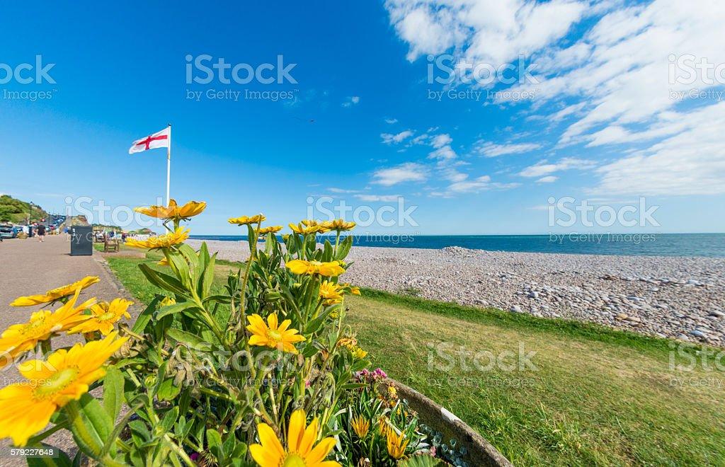 Yellow Flowers Budleigh Salterton in Devon stock photo