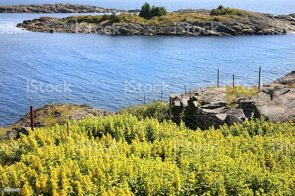 Yellow flowers by the ocean 免版稅 stock photo