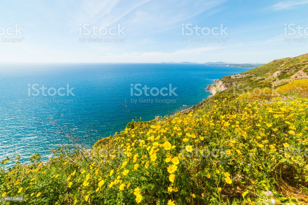 Yellow flowers by the sea in Sardinia - Royalty-free Beach Stock Photo