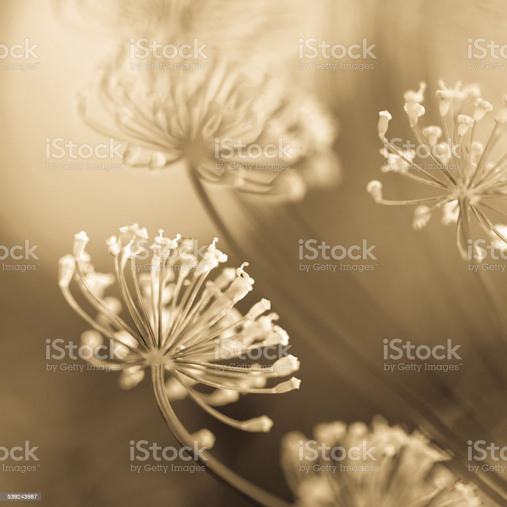Yellow flowers close-up royalty-free stock photo