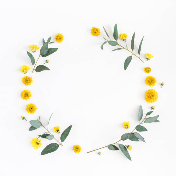 Yellow flowers, eucalyptus branches. Flat lay, top view stock photo