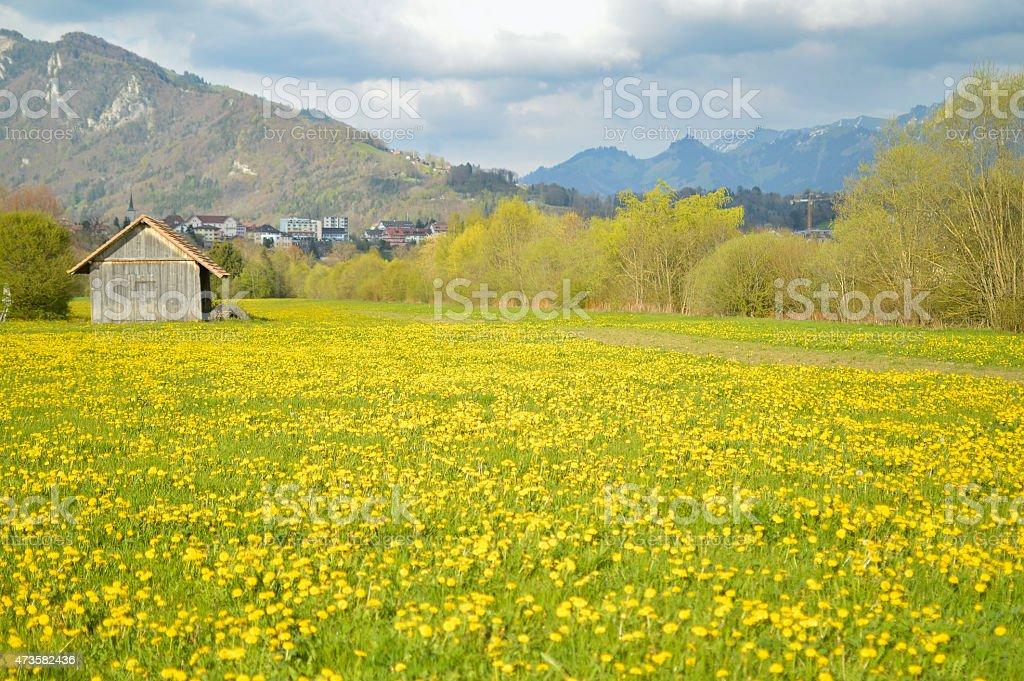 Yellow flowers field and house beautiful swiss landscape stock photo yellow flowers field and house beautiful swiss landscape royalty free stock photo mightylinksfo