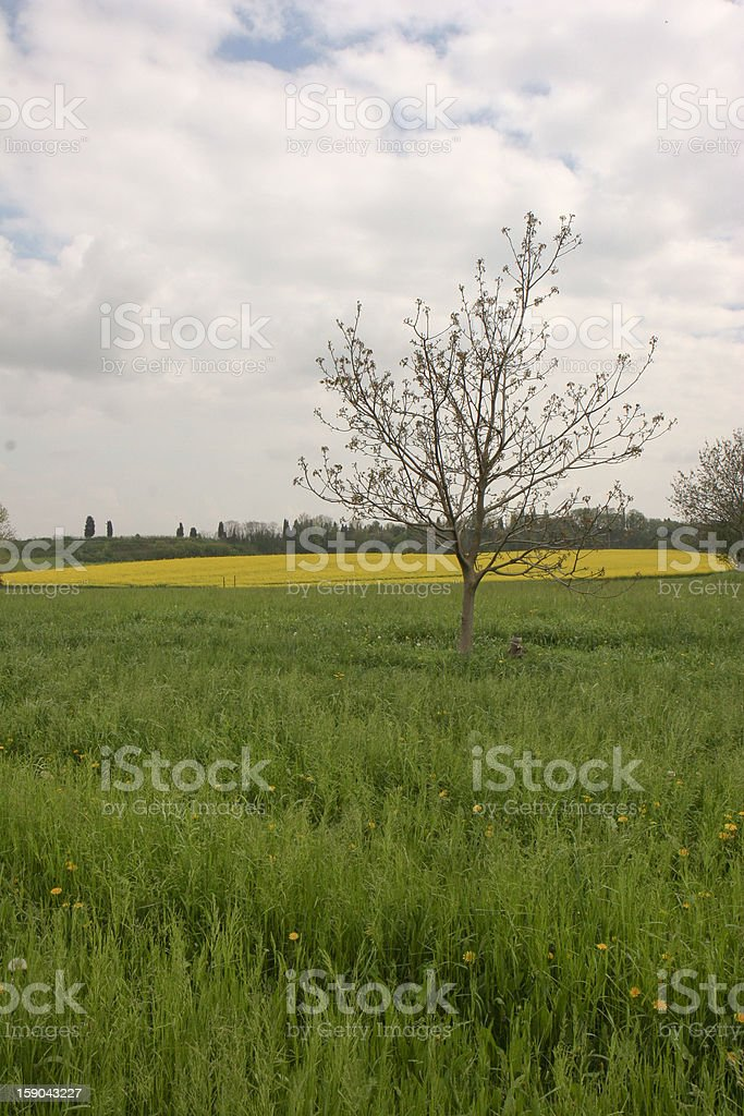 Yellow flowers field royalty-free stock photo