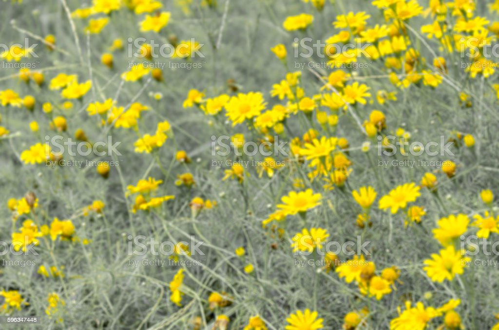 Yellow flowers field,vintage style, Filter blur royalty-free stock photo
