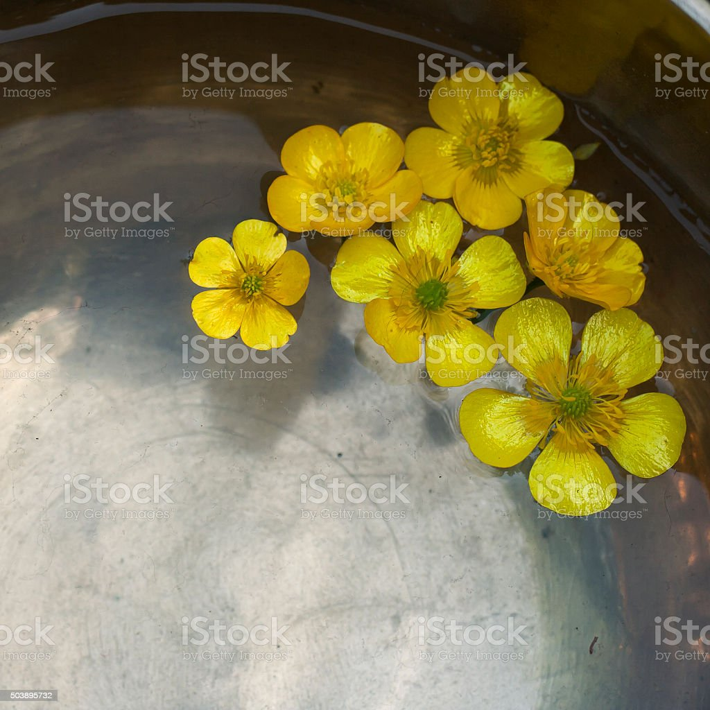 Yellow Flowers Floating In Water Stock Photo More Pictures Of Arts