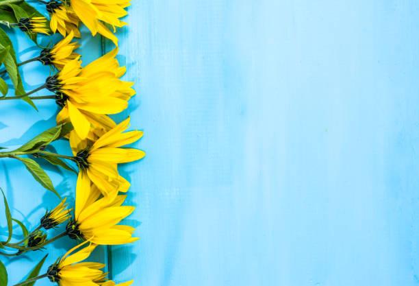 gelbe blumen rahmen auf blauem hintergrund, floral grußkarte - herbst hochzeitseinladungen stock-fotos und bilder