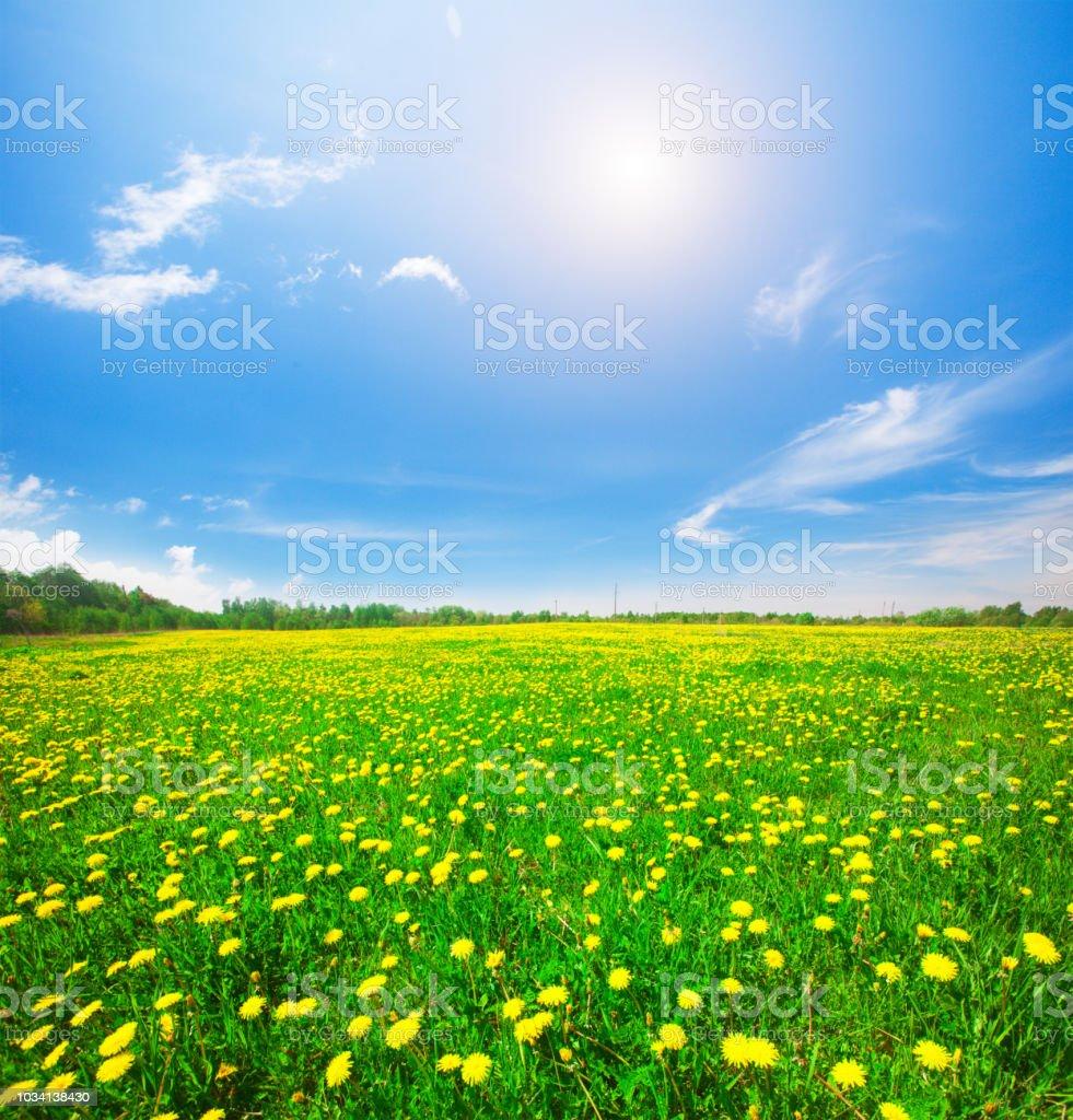Gelbe Blumen Hügel unter bewölkten Himmel Blau – Foto