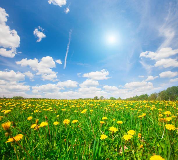 Gelbe Blumen Hügel unter blauem wolkenverhangenen Himmel – Foto