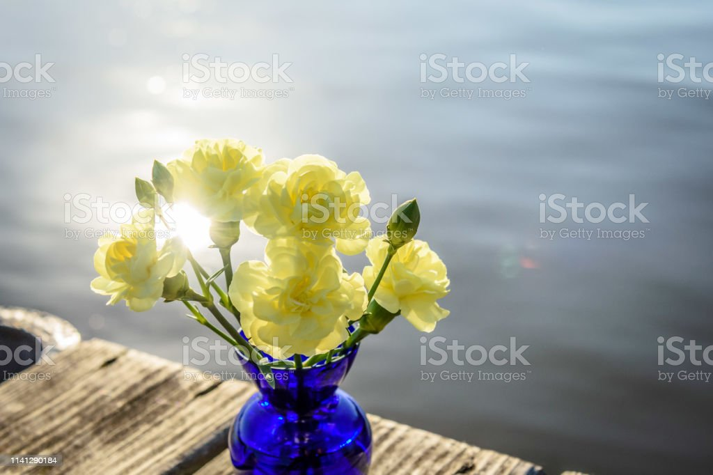 Closeup of yellow carnations in cobalt blue vase with calm water in...