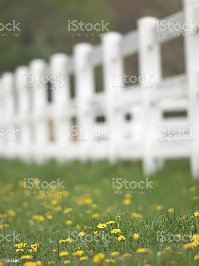 Yellow Flowers in Pasture stock photo