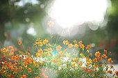 Yellow flowers in sunlight