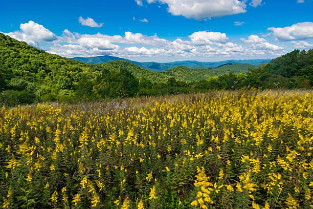 Yellow Flowers in the Appalachian Mountains - foto de stock