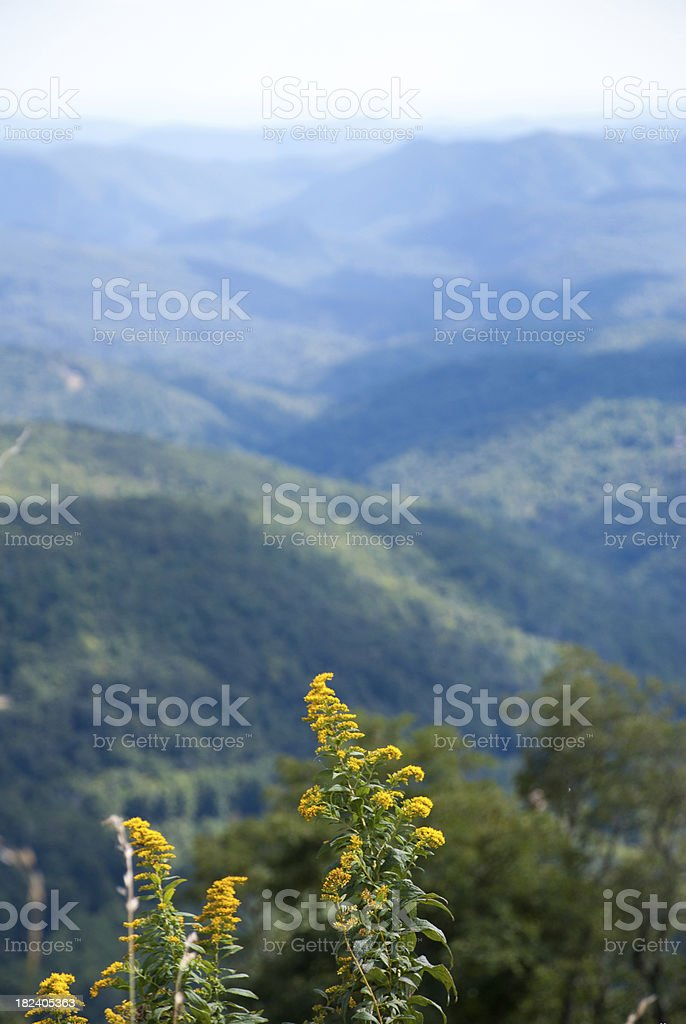 Yellow Flowers in the Blue Ridge Mountains royalty-free stock photo